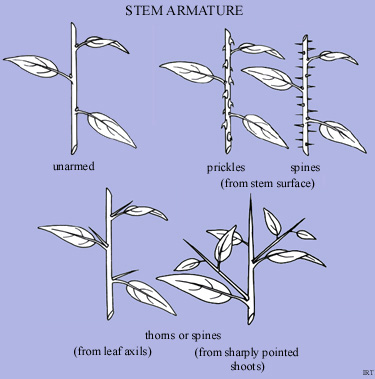 Stem Armature