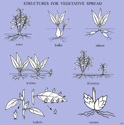 Structures for vegetative spread