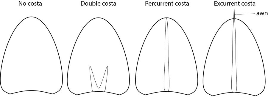 leaf costa