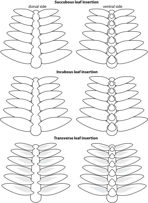 leaf insertion